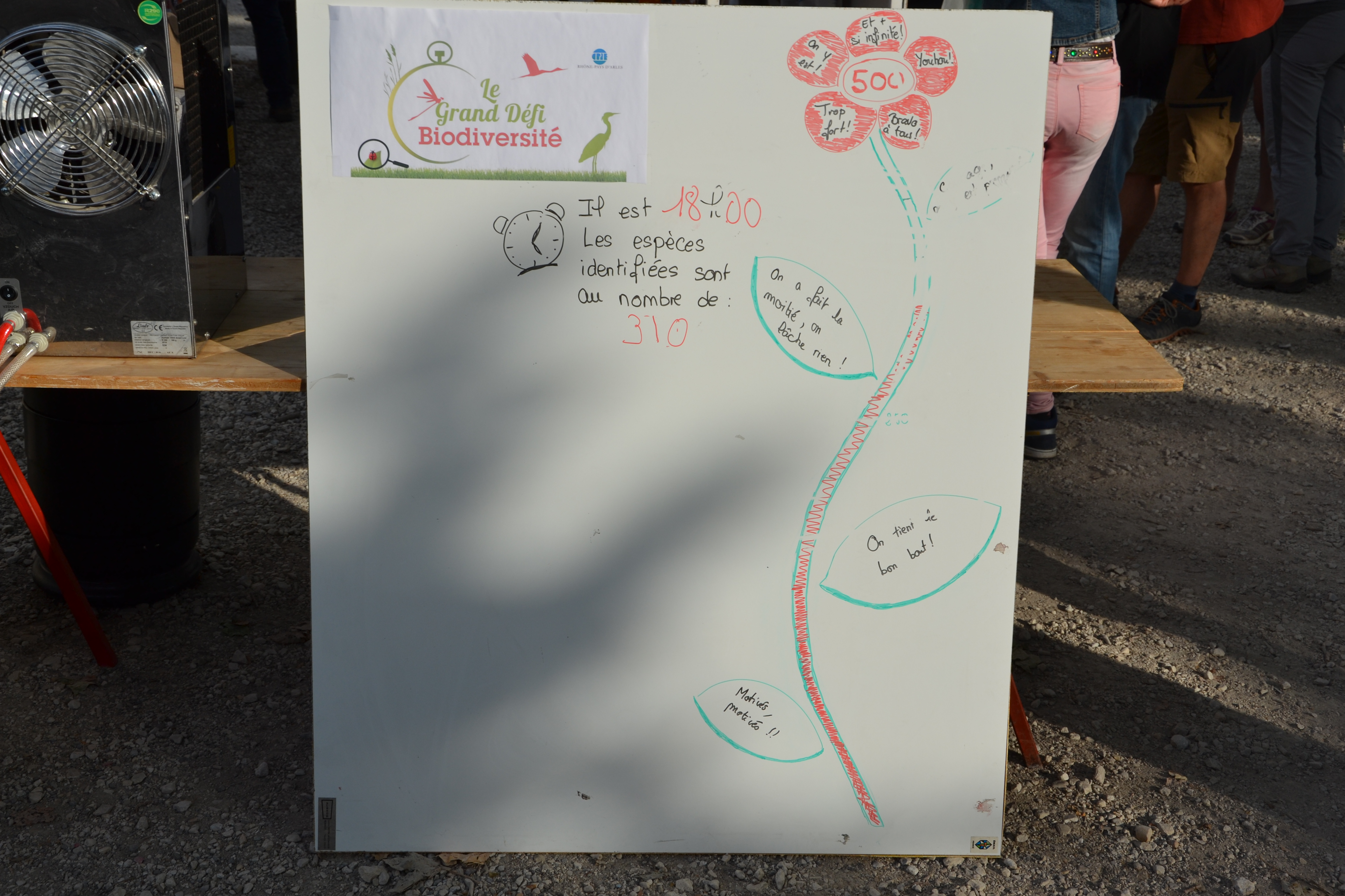 marais de Beauchamp 26 mai 2018 (133)